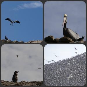 Ballesta Birds