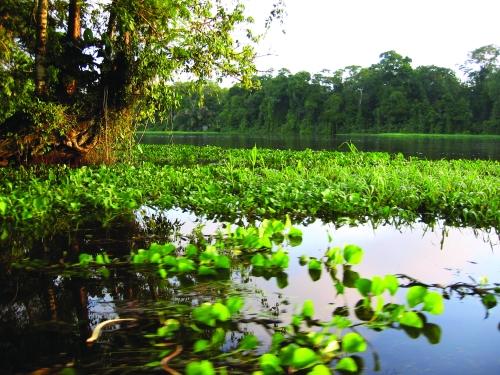 swamp in Costa Rica